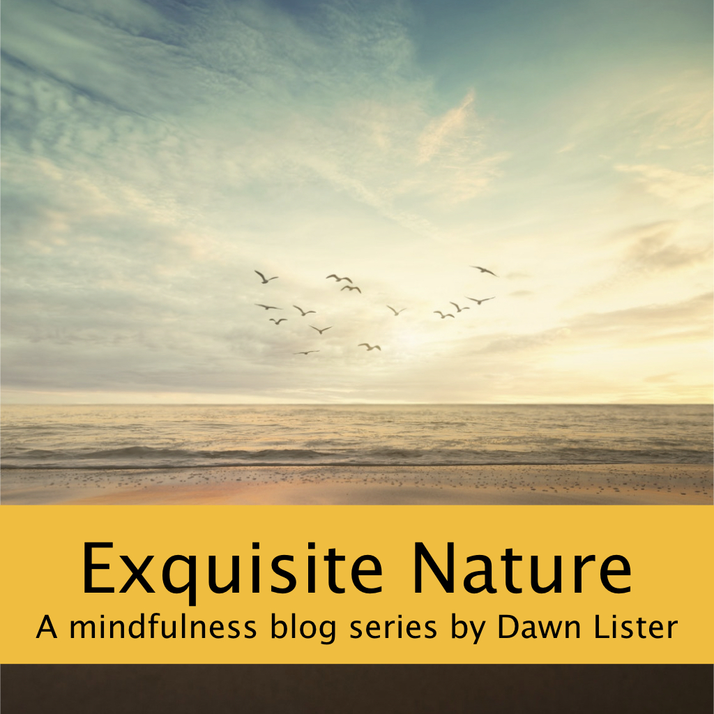 beach picture with banner reading 'Exquisite Nature A mindfulness blog series by Dawn Lister'